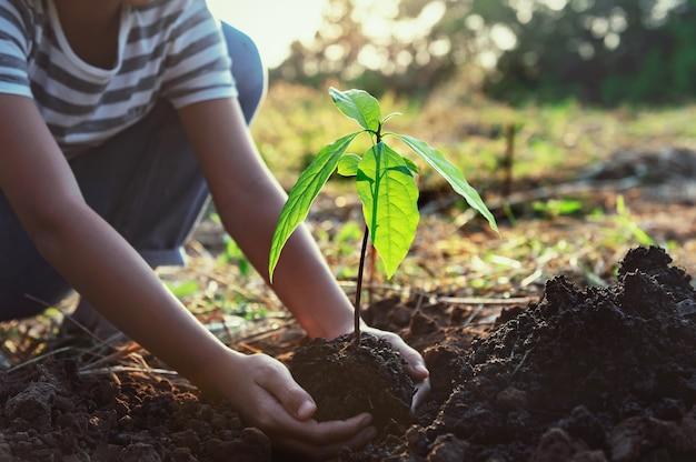 자연에 심기 위해 작은 나무를 잡고 손. 개념 녹색 세계