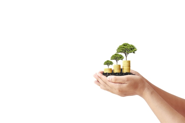 Рука держит маленькое дерево, растущее из монет на белом фоне, концепция финансов