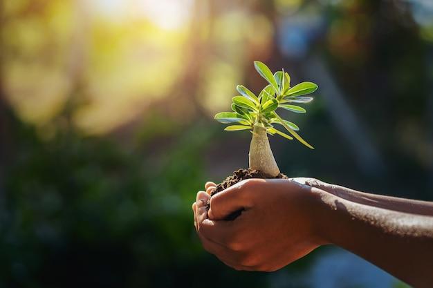 朝の光で小さな木を持っている手。コンセプトセーブワールド