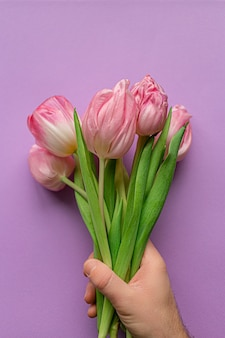 Hand holding tender pink tulips on pastel violet background. greeting card for women's day. flat lay. copy space. concept of international women's day, mother's day, easter. valentines love day