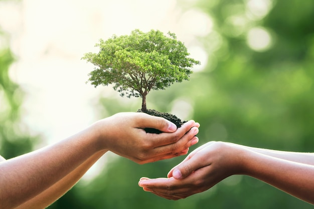 Hand holding tree on blur green nature.