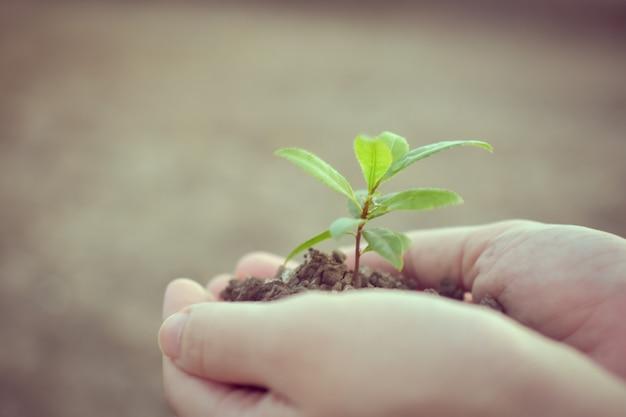 木の成長自然地球背景ソフトフォーカスを持っている手