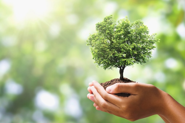 木を持っている手は、緑の自然の背景をぼかし。エコアースデー