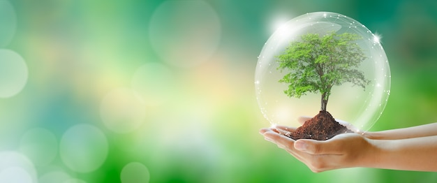 Hand holding tree with soil earth day environment ecology and save the world concept