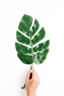 熱帯のヤシの葉を持っている手