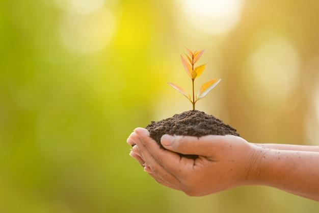 緑豊かな庭園の土壌に熱帯の木を持っている手ぼかし。成長と環境の概念