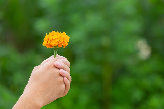 Hand holding yellow beautiful  blooming flowers among of nature