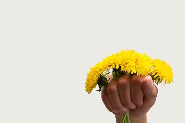 明るい背景、コピースペース、はがきに黄色い野花タンポポを持っている手。明るい春の野花。愛、恋愛、結婚式のコンセプト