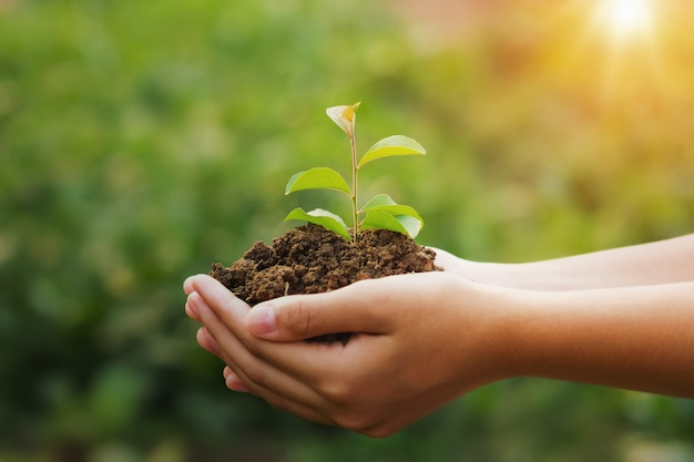 日光と若い植物と緑の背景を持っている手。エココンセプトアースデー