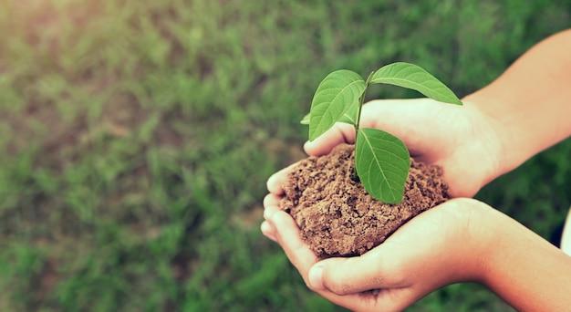 緑の草の背景が付いている土で育つ若い植物を持っている手。環境エココンセプト