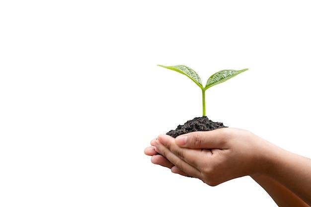 클리핑 패스를 사용하여 흰색 배경에 격리된 어린 식물을 손에 들고 있습니다.