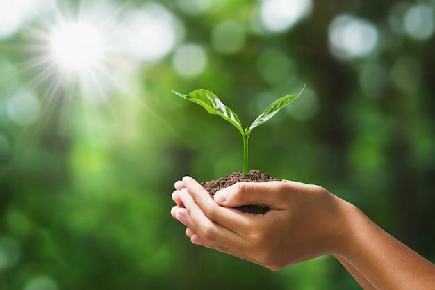 Рука держа молодое растение на природе нерезкости зеленой. концепция эко земля день