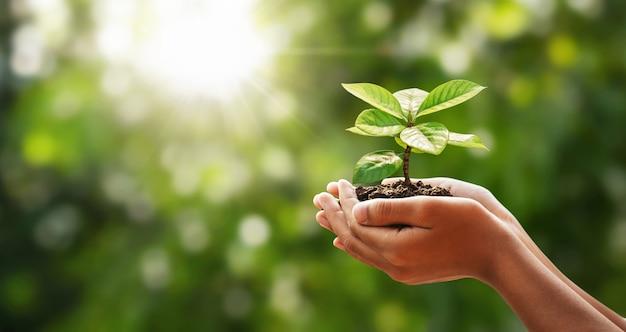 太陽の光と緑の自然に若い植物を持っている手。コンセプトエコアースデー