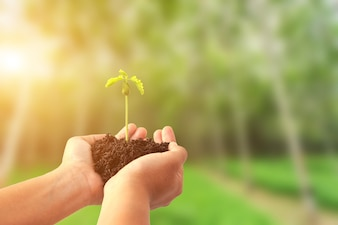 Hand holding young plant with soil on blur tree background