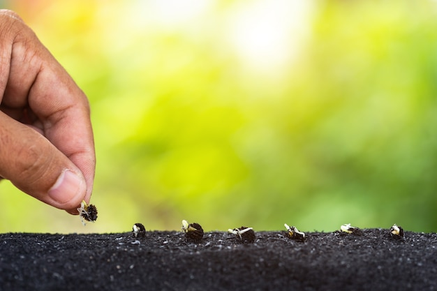 Рука, проведение молодых семян дерева папайя, готовы к росту в почве на природе зеленый фон