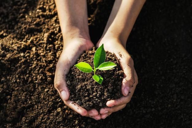 손을 잡고 심기 위해 젊은 나무.