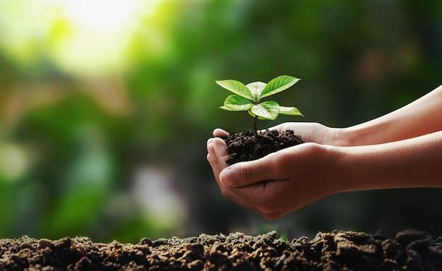 世界を救う庭の概念に植える若い木を持っている手