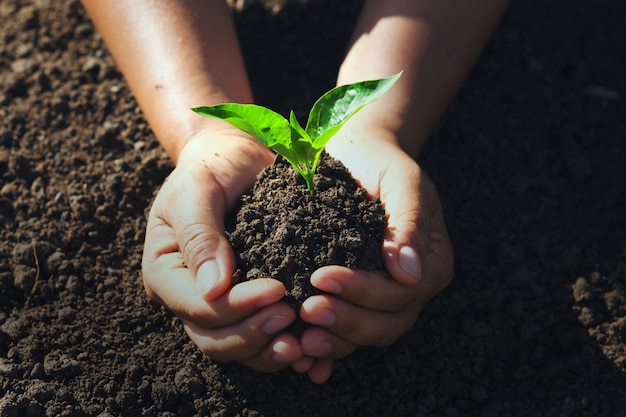 Hand holding young tree for planting.