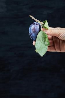 黒地に新鮮な梅を手に持って。