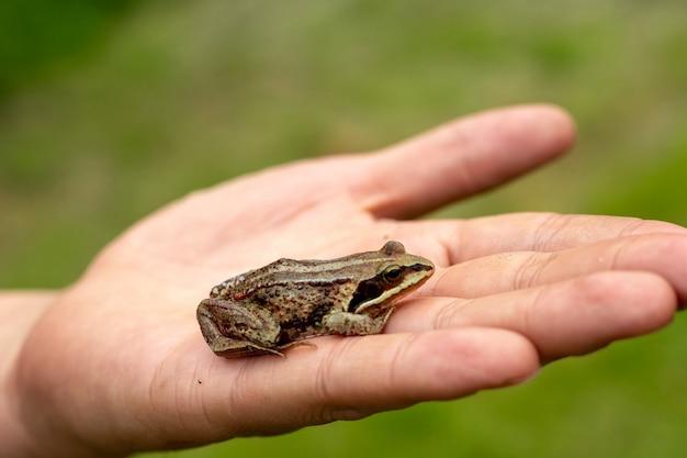 手は緑のカエルを持っています野生生物の生態の保護の概念