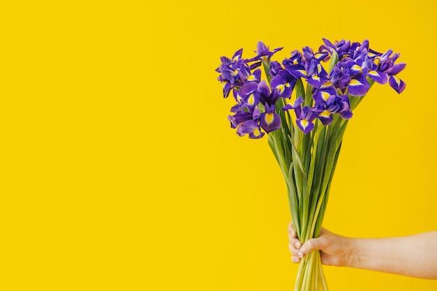 手は黄色の背景に青い菖蒲の花束を持っています。誕生日、3月8日女性の日、愛とお祝いのコンセプト。テキスト側面図のコピースペース付きバナー