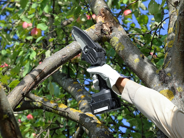 Hand holds chain saw with battery to trim broken branch of apple tree