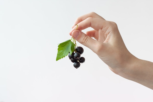 The hand holds a few black currant berries with a leaf on a white background, a copy of the space, a place for the inscription