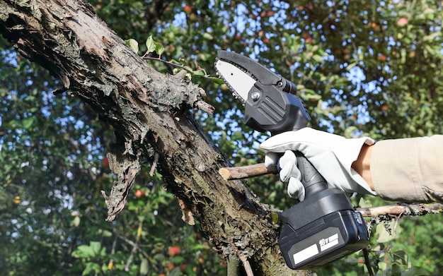 Hand holds light chain saw with battery to cut dry tree branches in garden
