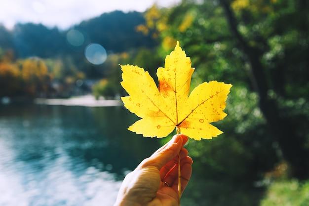 手は、スロベニアのブレッド湖の背景にカエデの黄色の葉を保持しています。秋の背景。
