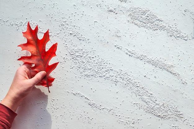 Рука держит яркий красный дубовый лист, плоский лежал на белом текстурированном фоне с копией пространства. минималистичные природные осенние украшения.