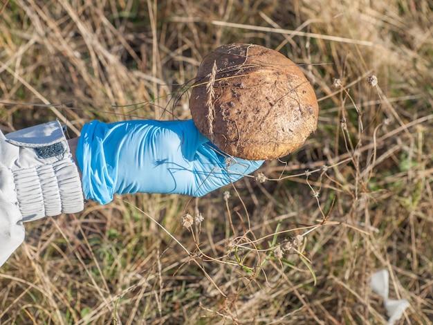 Рука в синей резиновой перчатке, держащей только что собранный гриб в осеннем лесу.