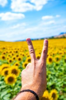 太陽を見て夏の開いたひまわりのフィールドで勝利の位置に手