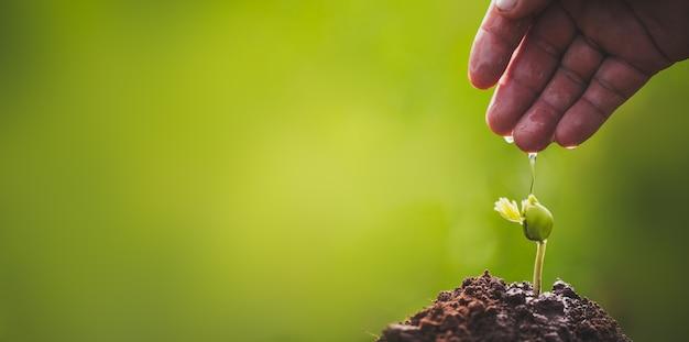 Рука растет и взращивает побеги дерева, растущего на плодородной почве с зелеными насаждениями, концепция ксо
