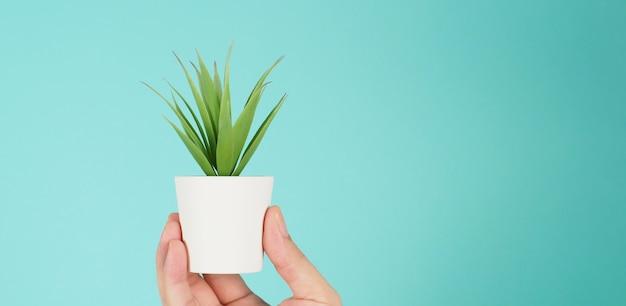 Рука держит искусственные растения кактусов или пластиковое дерево на мятно-зеленом или тиффани-синем фоне.
