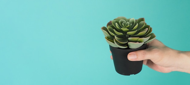 Hand is holding artificial cactus plants or plastic or fake tree on mint green background.