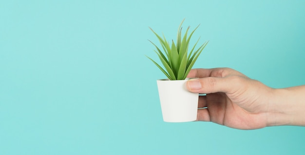 Hand is holding artificial cactus plants or plastic tree on mint green or tiffany blue background.