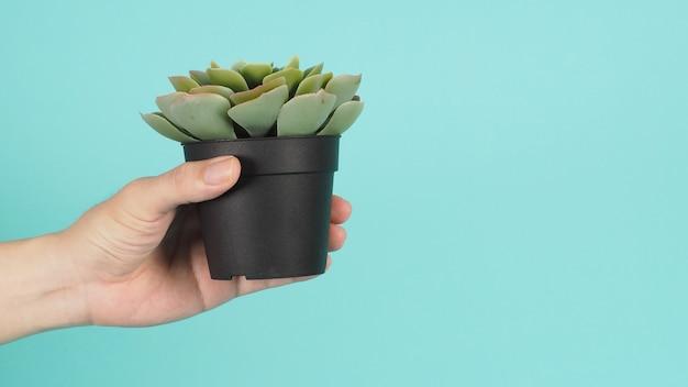 Рука держит зеленые искусственные растения кактуса или пластиковое или поддельное дерево на мятно-зеленом фоне.