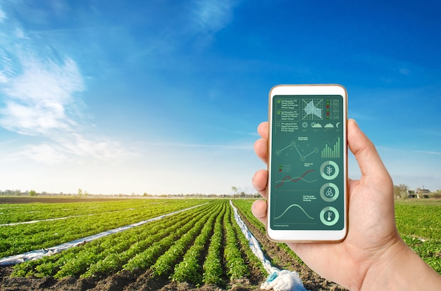 A hand is holding a smartphone with infographics on a potato plantation field