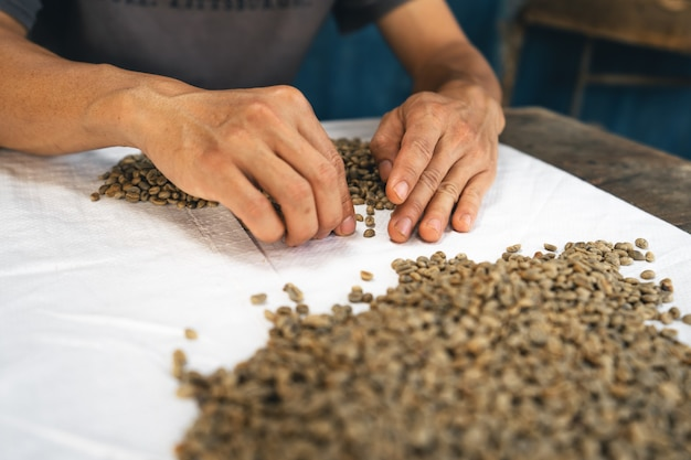 The hand is sorting the coffee beans before roasting them.