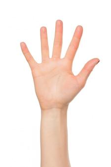 Рука, изолированная на белой руке