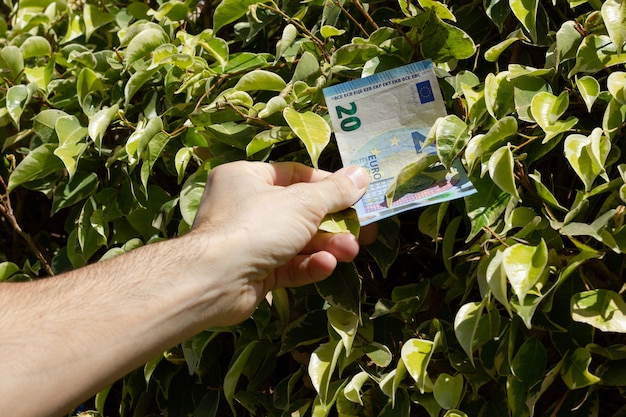 Hand of man taking twenty euro note bill from green leaves bush money growing on trees concept