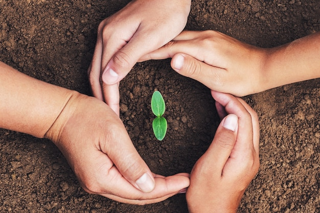 Hand mater and child protection green seedling growing in soil