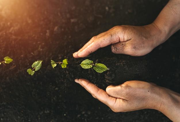 緑の苗を植える人の手。植物は自然と地球の日の概念を保護します。