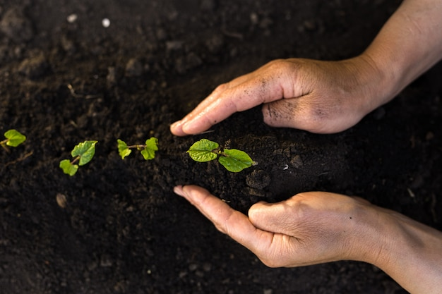Рука человека, сажающего зеленые саженцы. завод защиты природы и концепции дня земли.
