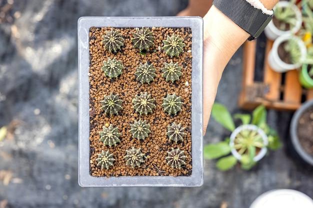 サボテンの鉢を持っている女性の手。多肉植物をガラスの花瓶に移植して植物の植物相を作成する女性の庭師のクローズアップ。