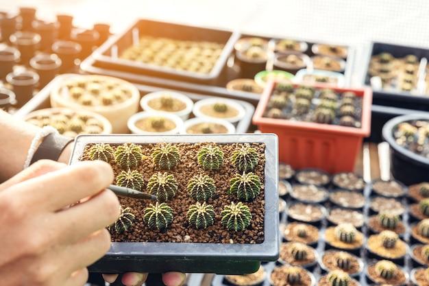 Рука женщины, держащей горшок кактуса. крупным планом - женщина-садовник, пересаживающая суккуленты в стеклянную вазу для создания ботанического флорариума.