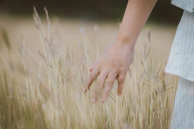 Рука красивой азиатской женщины наслаждаясь естественным лугом и имеет чувство свободы