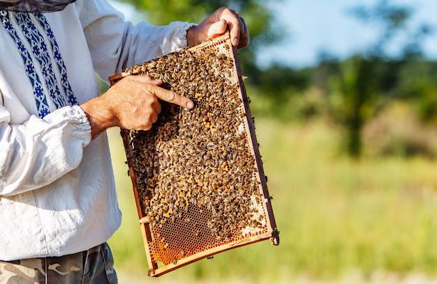 Рука пчеловода работает с пчелами и ульями на пасеке. пчелы на сотах. рамки пчелиного улья