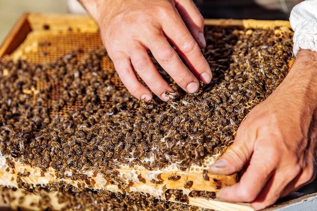 Рука пчеловода работает с пчелами и ульями на пасеке