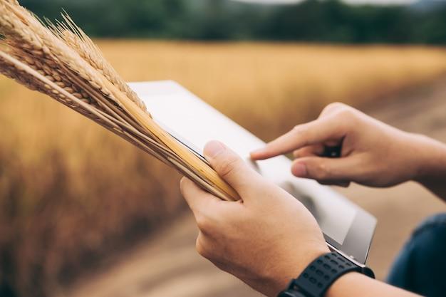 農民の手がタブレット画面に触れて、ウェブサイトやインターネット、農業、自然の概念でリアルタイムの小麦の価格を検索します。